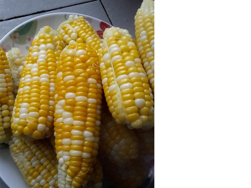 Kami beri resepi bubur jagung yang sedap bersama tips untuk memilih jagung yang manis.Kalau nak bubur jagung pekat, boleh tambah antara dua bahan ini.Best.